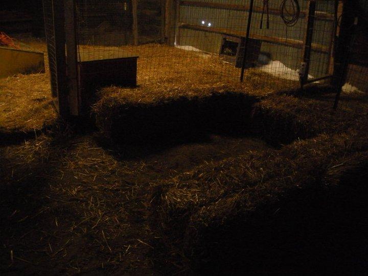 GLRR piglet nest