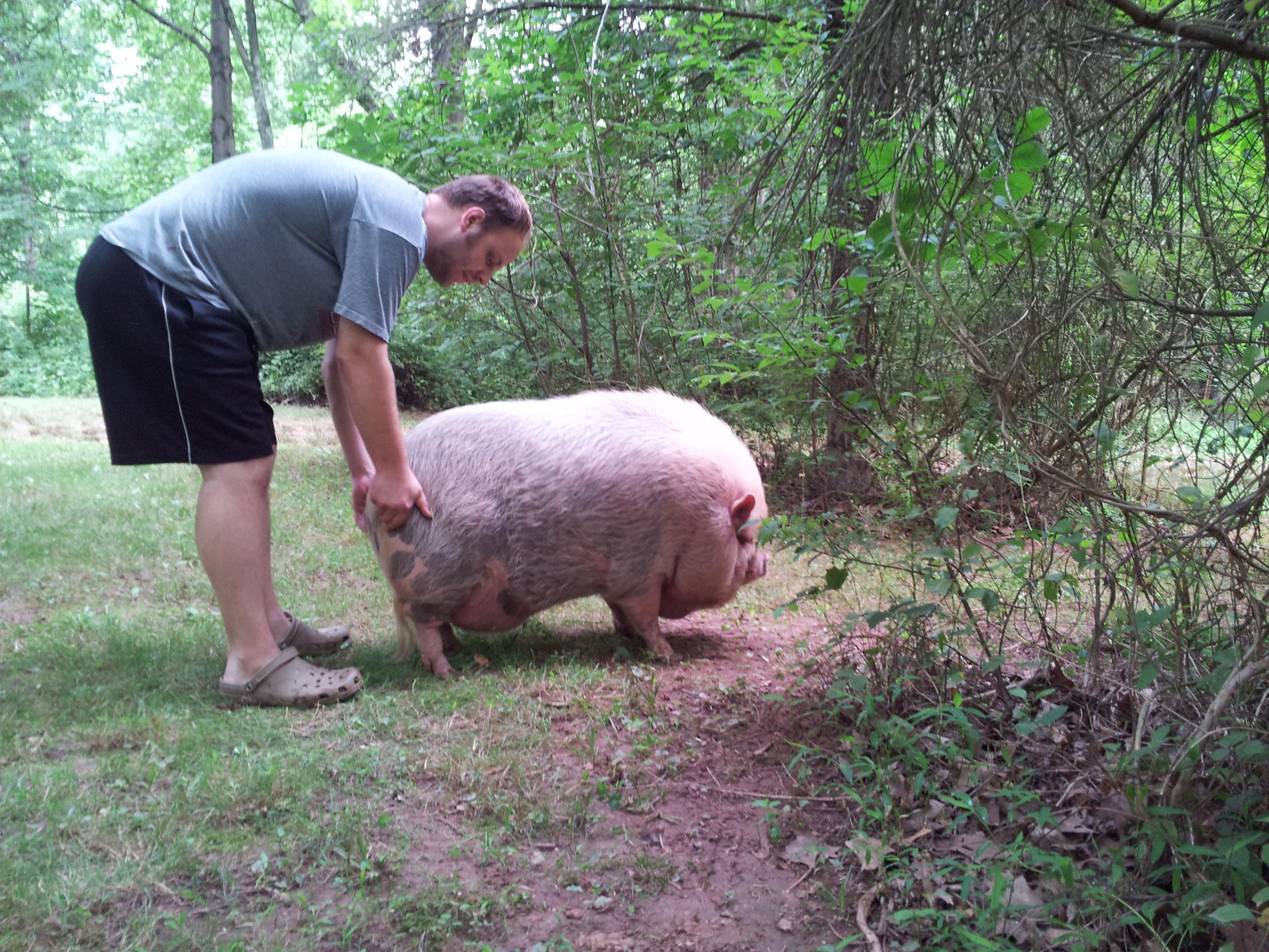 He's a big pig!