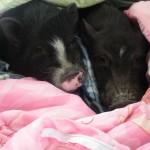 Snickers and Petunia snugglin