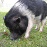 Penelope being a real pig