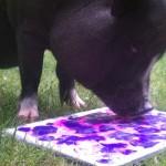Petunia Pig Painting Slider