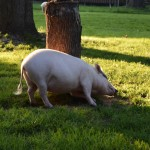 """Silly Fiona trying to help me move branches. """"Don't you know that's a whole tree stump Fiona?"""""""