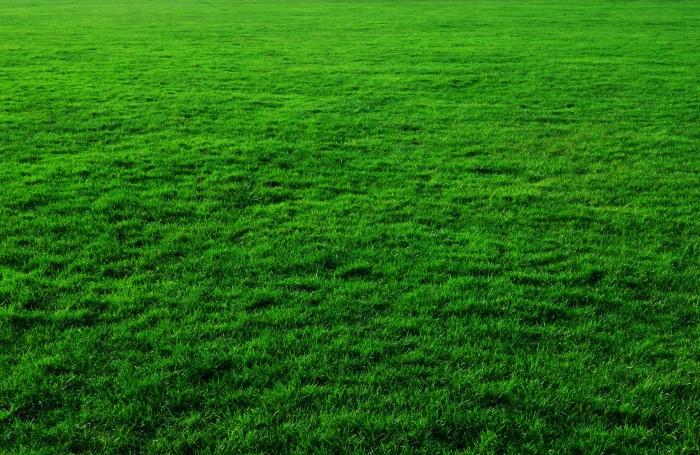 grass_background_201062